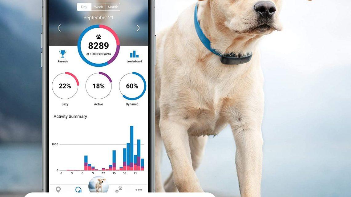 Fonctionnement du collier GPS pour chien